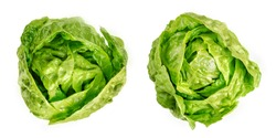 Two Romaine lettuce hearts, from above. Cos lettuce, tall lettuce heads of sturdy dark green leaves with firm ribs down their centers. Lactuca sativa longifolia. Isolated over white, macro food photo.
