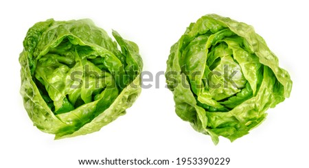 Two Romaine lettuce hearts, from above. Cos lettuce, tall lettuce heads of sturdy dark green leaves with firm ribs down their centers. Lactuca sativa longifolia. Isolated over white, macro food photo. Stock photo ©
