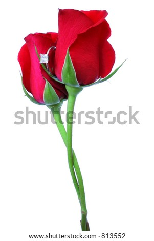 Two roses with stems intertwined and engagement ring