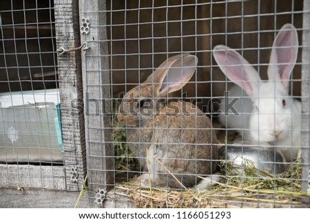 Two sad bunnies looking through the metal wire frame of cage #1166051293
