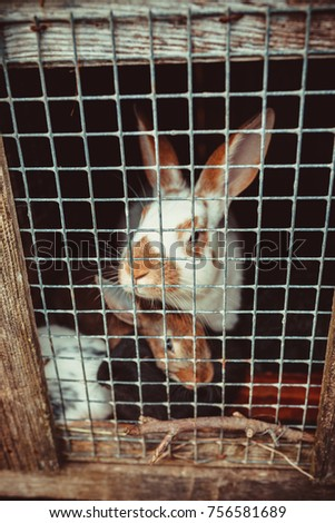 Two sad bunnies looking through the metal wire frame of cage #756581689