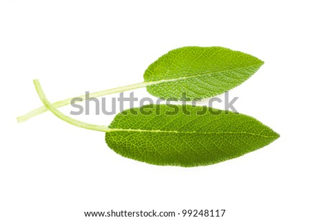 Two sage leaves isolated on white