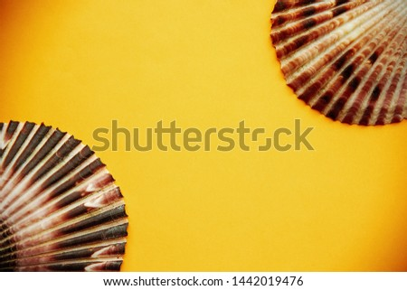 Two scallops top view on yellow background