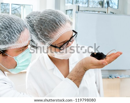 Two scientists observe black transgenic mouse