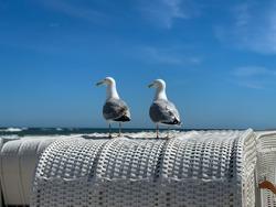 Two sea gulls sitting on a top of beach chair strandkorb and look on Baltic Sea on sandy beach, island Ruegen