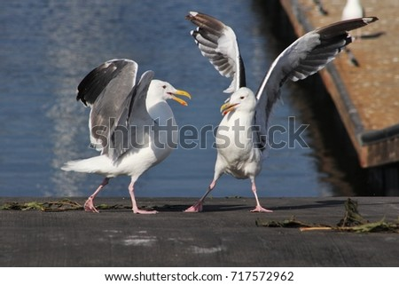 Two Seagulls #717572962