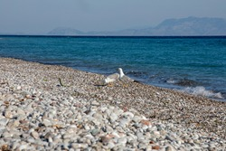 two seagulls on the aegean sea on a sunny day, horizontal
