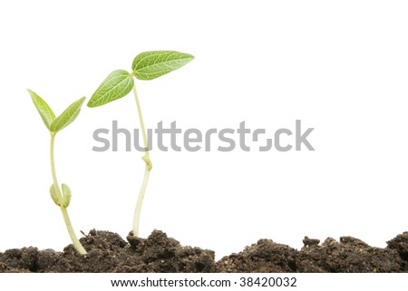 Two seedlings in soil with white copy space