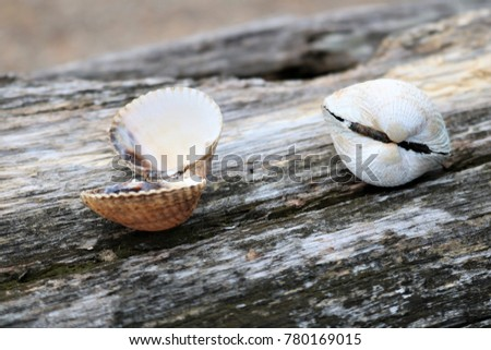 Two shells on a tree crushed by the seashore #780169015