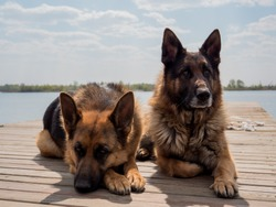 Two shepherd dogs. The dog is sitting on the pier. Dog and easter cake. Shepherd is sitting. Easter cake and eggs. Dog shepherd by the lake.