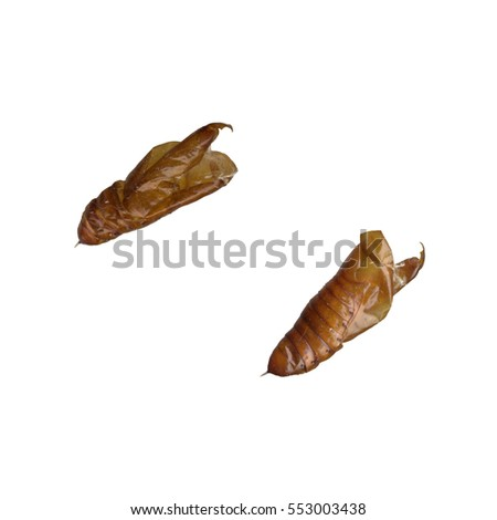 Two sides of caterpillar cocoon on a white background #553003438