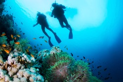 Two silhouettes of Scuba Divers swimming over the live coral reef full of fish and sea anemones.