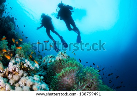 Stock Photo Two silhouettes of Scuba Divers swimming over the live coral reef full of fish and sea anemones.