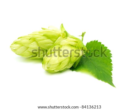 Two single hop cone with leaf. Isolated on white. - stock photo