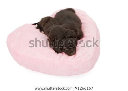 Two six week old puppies snuggling and sleeping on a heart shaped pink pillow.