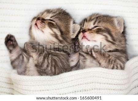 Two sleeping baby kitten