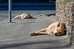 Two sleeping homeless dogs in street