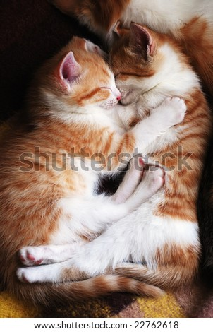 two sleeping kittens hug one another