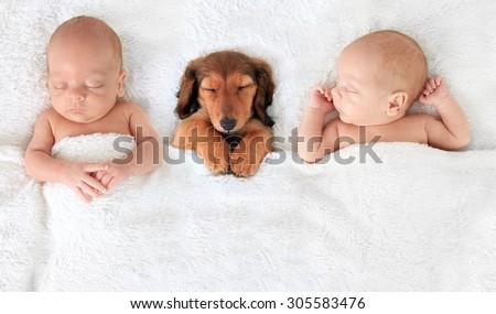 two Sleeping newborn babies with a dachshund puppy.