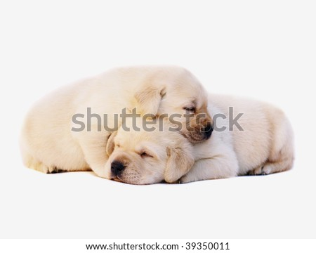 Two sleeping puppies.