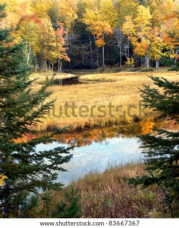 Two small beaver ponds reflect the Autumn color of Upper Peninsula, Michigan.  Fir tree branches frame tranquil scene.