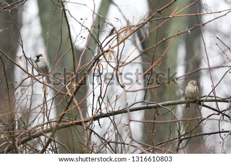 Two small birds look directly at the viewer on opposite sides of the picture. Hiding in a bush.