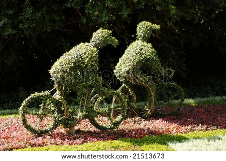 Two small bushes trimmed to the shape of cyclists