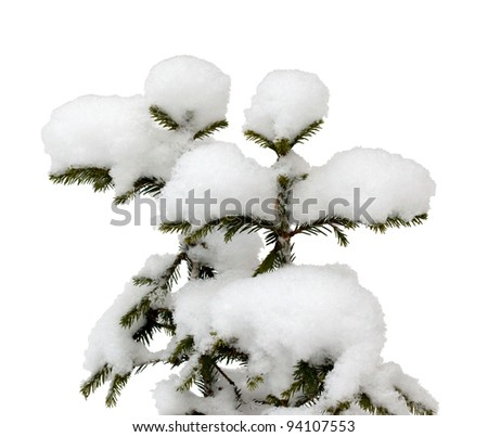 Two small Christmas tree in the snow isolated on white with clipping path