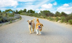 Two small cute stray dogs  pet lonely on the road looking at camera and chasing you. Lost stray pets without owner. Friendly dog lonely strayed in street, Cute doggy homeless Murcia, Spain, 2019