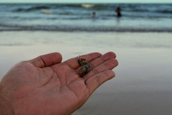 two  small hermit crabs ar on hand with beach and ocean background