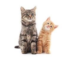 Two small kittens isolated on a white background.