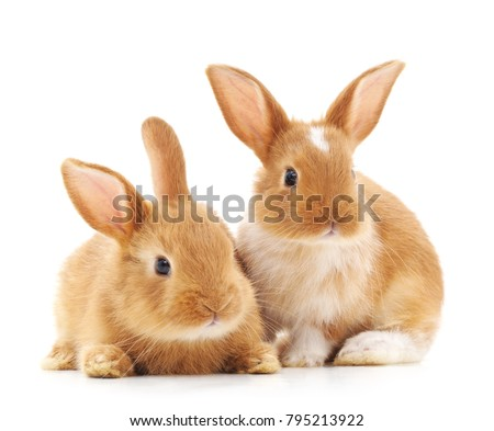 Two small rabbits isolated on a white background.
