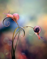 Two Snail in Curves - Colorful Macro Photography Series