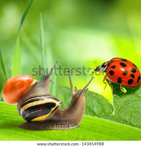 Two snails and ladybug looking at green background. Nature concept
