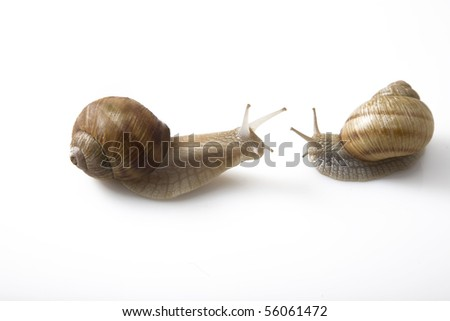 two snails face to face on white background, communication concept
