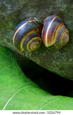 Two snails in love