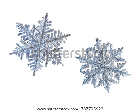 Two snowflakes isolated on white background. Macro photo of real snow crystals: large stellar dendrites with fine hexagonal symmetry, long, elegant arms with side branches and complex ornate shape. #737705629
