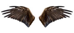 two spread brown eagle wings, isolated over white