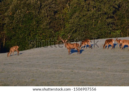 Two stags fighting with antlers in pairing season  #1506907556