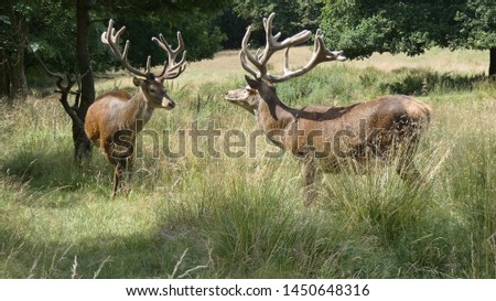 Two Stags Ready for Action #1450648316