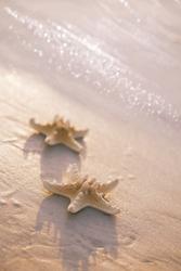 two starfish on sea ocean beach in Florida, soft gentle sunrise light color
