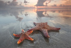 Two starfish on summer beach at sunrise