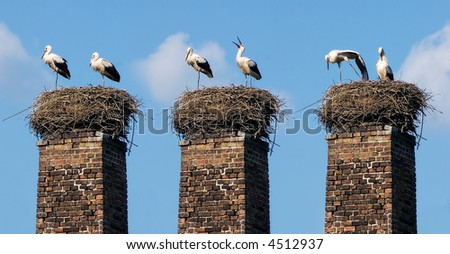 Two storks have arrived flied in a jack. The kid soon will be born
