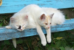 Two stray cats resting on the bench