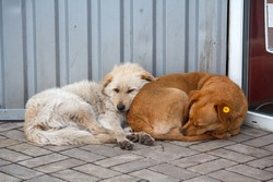 Two stray dog lying close to each other. Pets