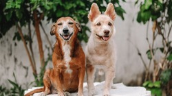 Two stray dogs that were adopted