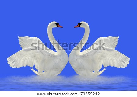 Two swans on the blue surface.
