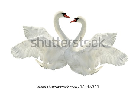 Two swans on white surface.