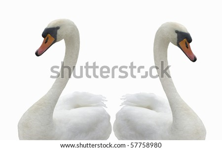 Two swans without a water. - stock photo