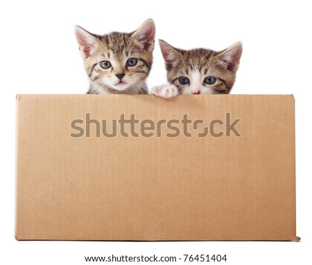 Two tabby kittens peeking out of the box
